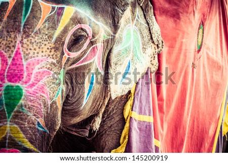 Elephant. India, Jaipur, state of Rajasthan. Royalty-Free Stock Photo #145200919