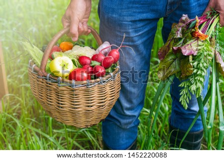 A man is holding a large basket with fresh organic vegetables. Autumn harvest concept #1452220088