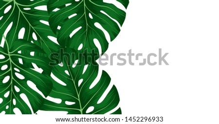Tropical green leaves monstera deliciosa on white background. Floral template for wedding invitation or decorative greeting card. #1452296933