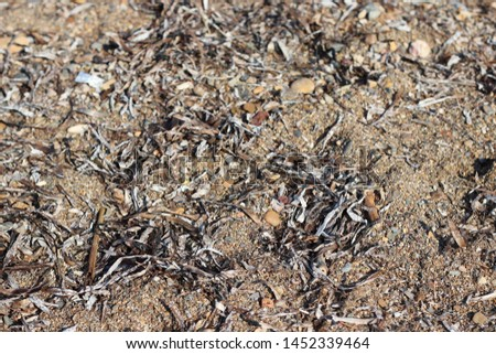 Beautiful sand beach texture close up #1452339464