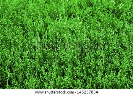 Green Grass background #145237834