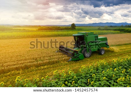 Harvester machine to harvest wheat field working. Combine harvester agriculture machine harvesting golden ripe wheat field. Agriculture aerial view #1452457574
