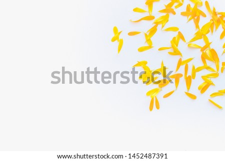calendula petals, calendula petals on white background, yellow petals, yellow petals on a white background #1452487391