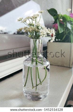 Close up view of a small transparent glass vase with white wildflowers on a window sill, Summer flowers decoration concept #1452516128