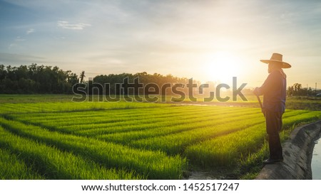 Agriculture farmer of Asia rice field work concept.Farmers grow rice in the rainy season.  Asian farmer working on rice field outdoor in Agricultural of Asia. Worker in rural work in farm with sunset #1452517247
