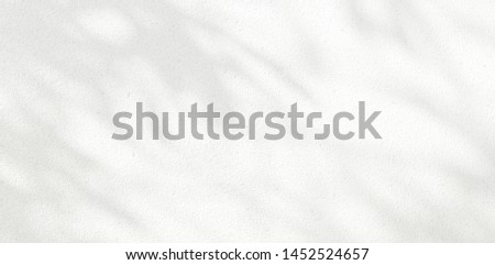 Abstract Shadow. blurred background. gray leaves that reflect concrete walls on a white wall surface for blurred backgrounds and monochrome wallpapers #1452524657
