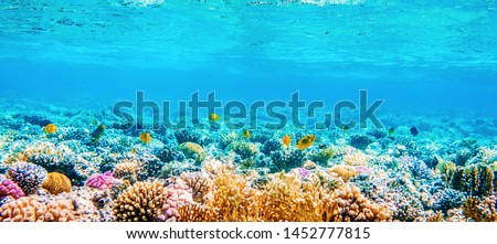 Beautifiul underwater panoramic view with tropical fish and coral reefs #1452777815