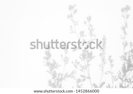 Gray shadows of the flowers and delicate grass on a white wall. Abstract neutral nature concept background. Space for text. Royalty-Free Stock Photo #1452866000