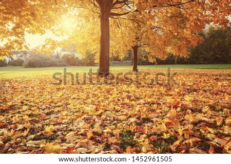 Sunny autumn landscape with golden maple trees in the park #1452961505