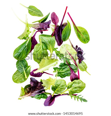 Flying Salad mix with rucola, frisee, radicchio, chard and lamb's lettuce. Green salad Isolated on white background  #1453014695