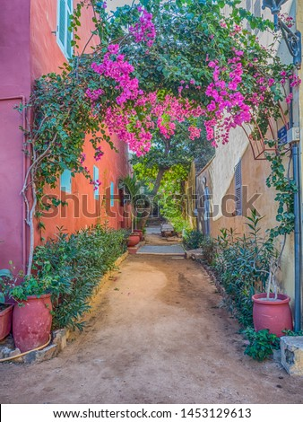 Goree, Senegal. Red, sandy path between the houses with plenty of colorful flowers on the Goree island. Gorée. Dakar, Senegal. Africa. #1453129613