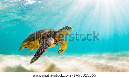 photo of Sea turtle in the Galapagos island Royalty-Free Stock Photo #1453313555