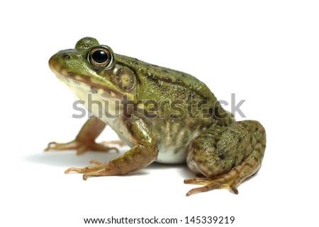 Frog on White #145339219