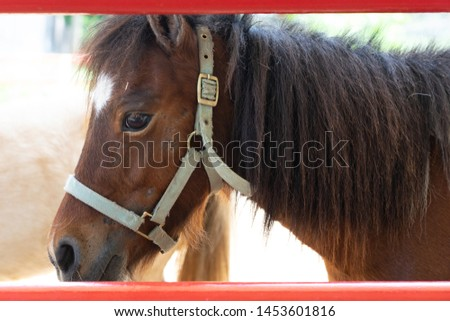 Closeup head of young brown horse wearing headgear standing next to space of red stable fence, focus on eye, with sunlight background #1453601816