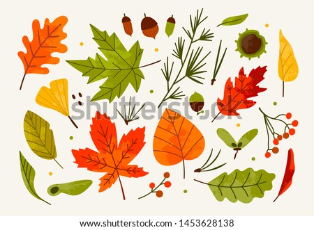 Hand drawn big vector set of various autumn leaves, rowan, acorn and chestnut. Colored trendy illustration. Flat design. Stamp texture. All elements are isolated #1453628138