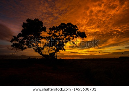 a tree silhouette.Amazing sunset.Colorful sky in the sunset. Natural Sunset Sunrise Over Field Or Meadow. Bright Dramatic Sky And Dark Ground. #1453638701