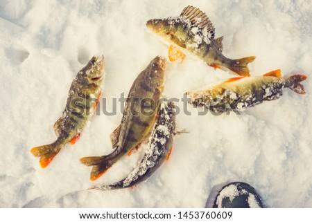 winter sport winter fishing fish catch #1453760609