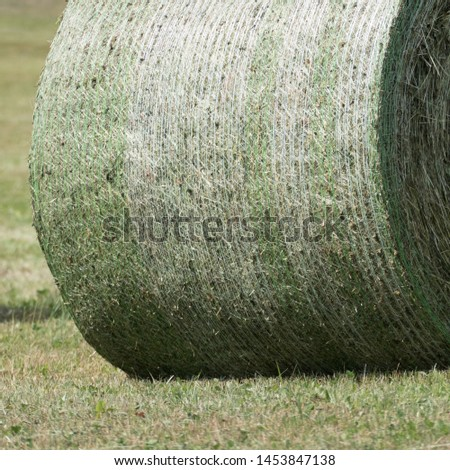 Detail of the green and white colored round bale net around a silage bale. The silage is compressed and bounded by a baler. The image shows the bale without a wrapping foil by a bale wrapper. #1453847138