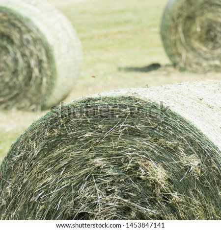 Parts of three compressed round silage bales bounded in a round bale net colored in green and white. The silage bale in the front is focused and the two round bales in the background are blurred. #1453847141