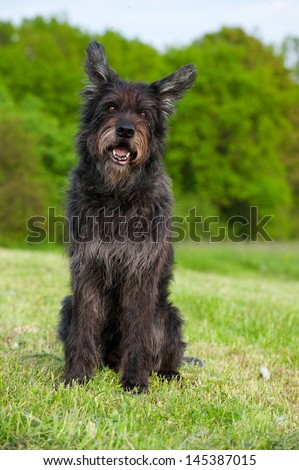 Mixed breed dog on a meadow #145387015