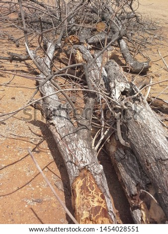 Dry trees fell on the gravel soil. #1454028551