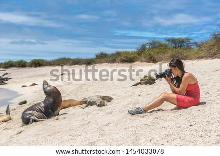 Galapagos tourist photographing taking pictures of many Galapagos Sea Lions on cruise ship adventure travel holidays vacation, Mann Beach (Playa Mann), San Cristobal, Galapagos, Ecuador.