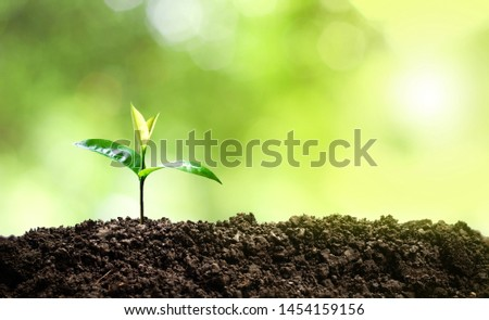 Small trees are growing in the middle of the sun, warm in the morning, the concept of saving the world and reducing global warming. #1454159156