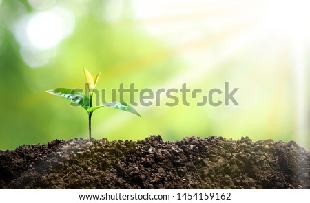 Small trees are growing in the middle of the sun, warm in the morning, the concept of saving the world and reducing global warming. #1454159162