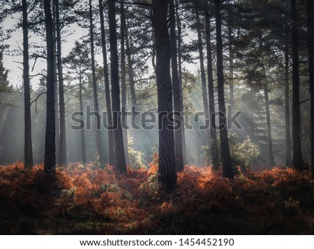 Sun rays through trees new forest UK #1454452190