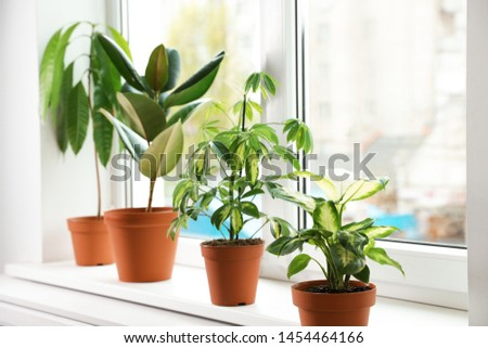 Different indoor plants on window sill at home #1454464166