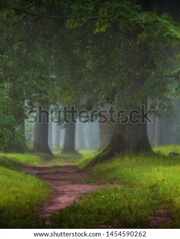 beautiful view of magic foggy misty morning in the forest