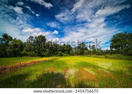 Landscape Rice Paddy, agriculture field with sky and cumulus clouds #1454756675