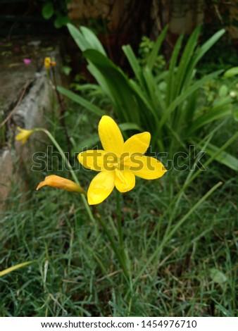 yellow flower yellow wallpaper yellow nature yellow background #1454976710