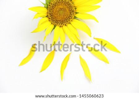 sunflowers isolated on white background #1455060623