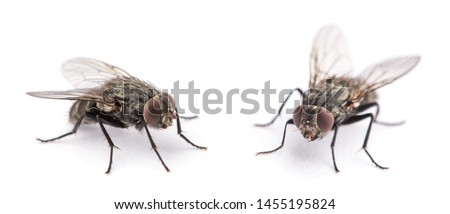 fly isolated on a white Royalty-Free Stock Photo #1455195824