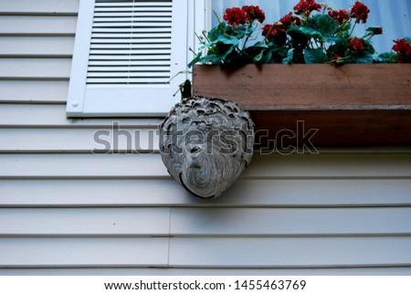 hornet nest on house window
