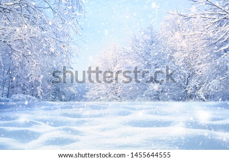 Winter Christmas idyllic landscape. White trees in forest covered with snow, snowdrifts and snowfall against blue sky in sunny day on nature outdoors,  blue tones. #1455644555