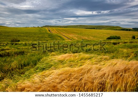 Beautiful wheat field in windy weather. Field against the sky. Ukrainian landscape. Ukraine #1455685217