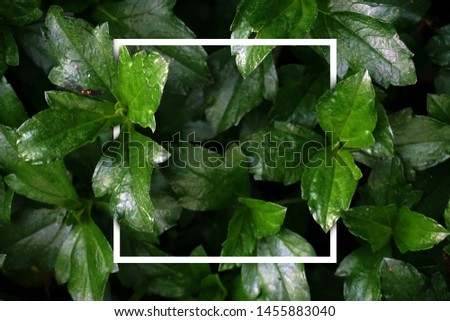 background of leaves with white box lines in the middle, instagramable #1455883040