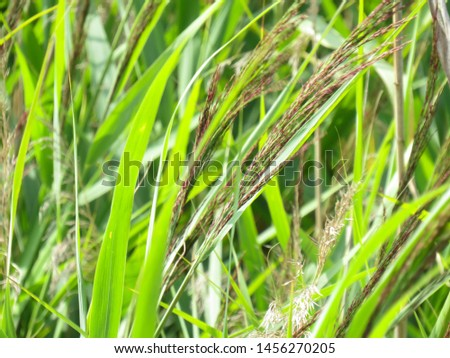A beautiful reed is on the macro photo #1456270205