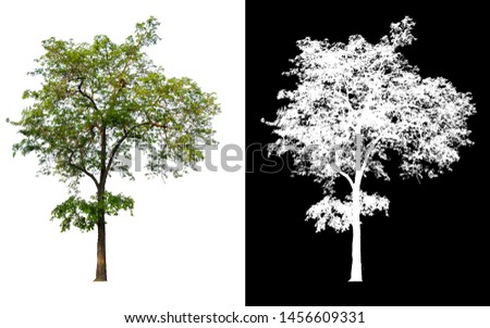 single tree with clipping path and alpha channel #1456609331
