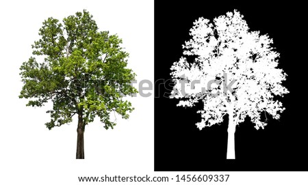 single tree with clipping path and alpha channel #1456609337