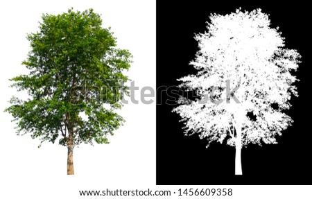 single tree with clipping path and alpha channel #1456609358
