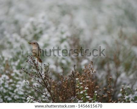 Bird in white flower garden #1456615670