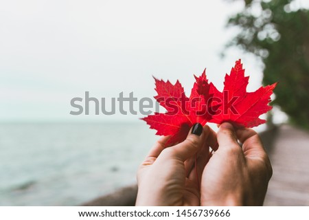 Couple in love holding with hands two red maple tree leaves. National symbol of Canada. Toronto Island Park #1456739666
