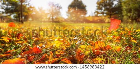 sunshine in autumnal idyllic landscape, fall leaf in meadow, blurred natural autumn background, beautiful empty autumn idyll Royalty-Free Stock Photo #1456983422