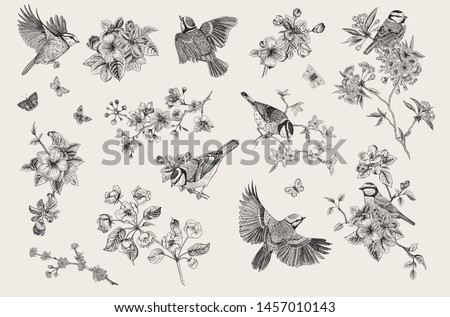Vintage illustration. Blossom garden with tits. Birds and flowers. Set  Royalty-Free Stock Photo #1457010143