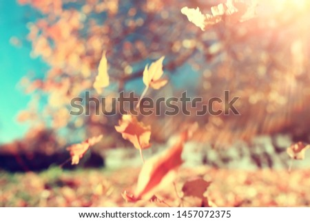 yellow leaves bokeh seasonal background / beautiful autumn leaves yellow branches abstract background, leaf fall concept #1457072375
