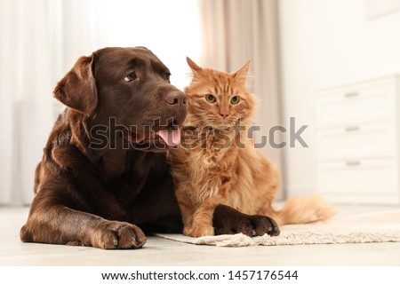 Cat and dog together on floor indoors. Fluffy friends #1457176544