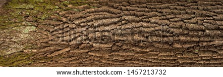 Relief texture of the brown bark of a tree with green moss on it. Horizontal photo of a tree bark texture. Relief creative texture of an old oak bark. #1457213732